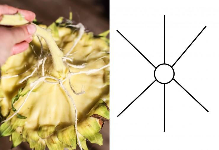 Sunflower Head Hanger | Easy DIY | Sunflower Birdfeeder | Creative Cain Cabin