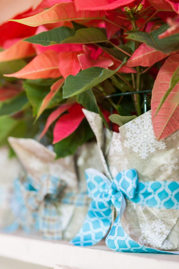 Affordable Hostess Gift Anyone Can Make   All You Need is a Poinsettia Plant, Wrapping Paper, and Ribbon   creativecaincabin.com