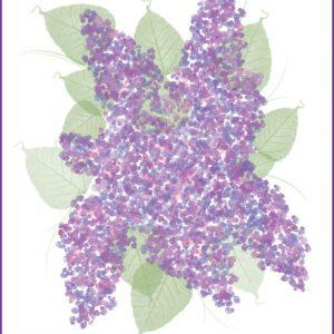 Lilac Printable | CreativeCainCabin.com