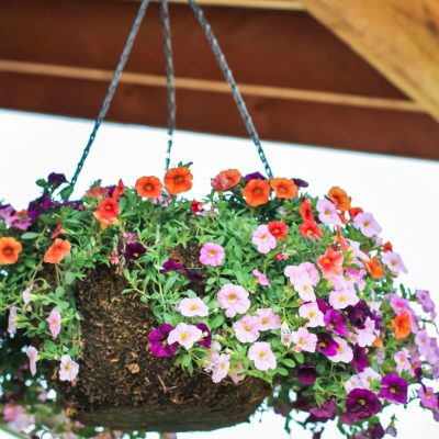 Hanging Flower Basket Advice Needed