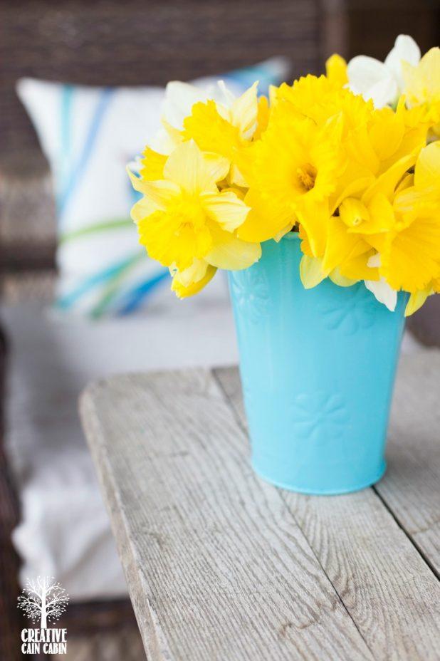 Daffodil Blooms | CreativeCainCabin.com