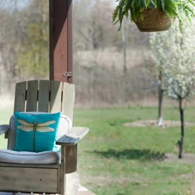 Summer Porch with Ferns and Dragonflies
