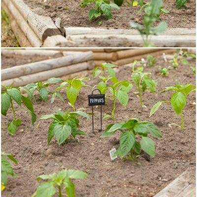 Raised Bed Garden Planting