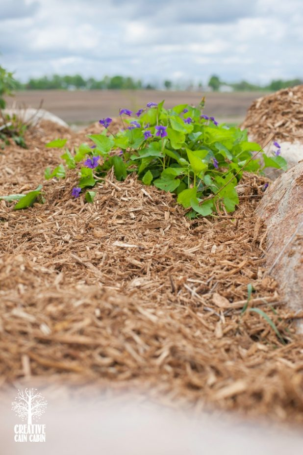 Mulched Flowers | CreativeCainCabin.com