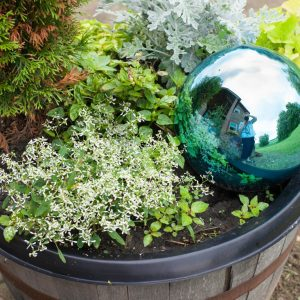 Whiskey Barrel Gazing Ball Garden | Garden | Container Garden | CreativeCainCabin.com