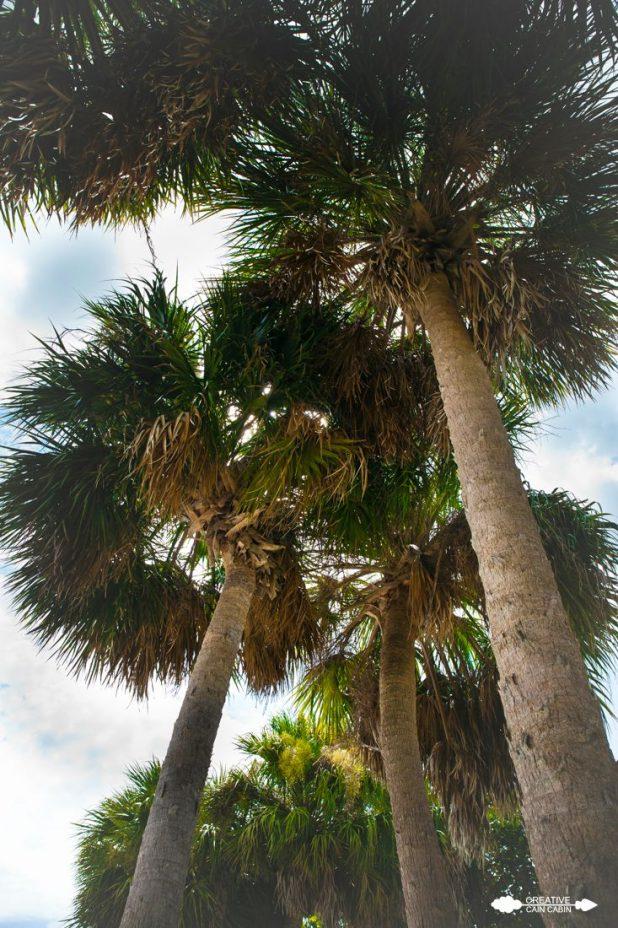 Palm Trees   CreativeCainCabin.com