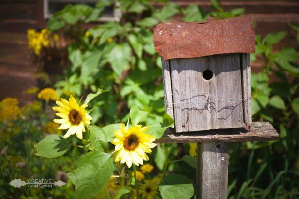 Sunflower Blooms and a Rustic Birdhouse   CreativeCainCabin.com
