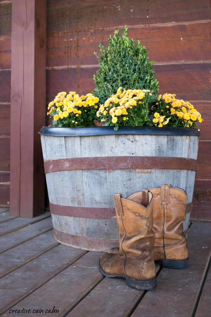 Rustic Front Porch of a Log Cabin Decorated For Fall Using Whiskey Barrels, Boxwoods, Mums, and Bittersweet