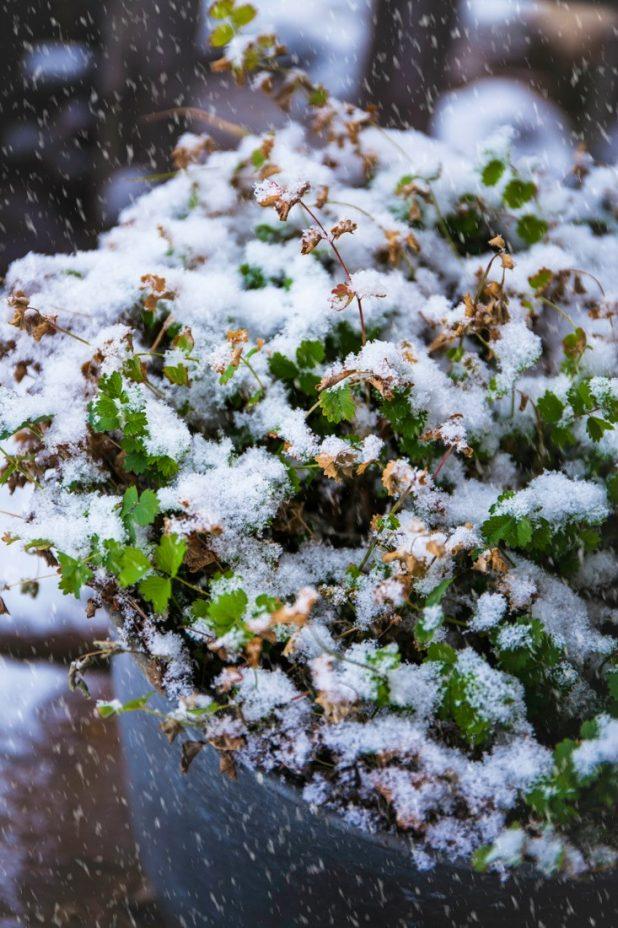 First Accumulating Snow In Michigan