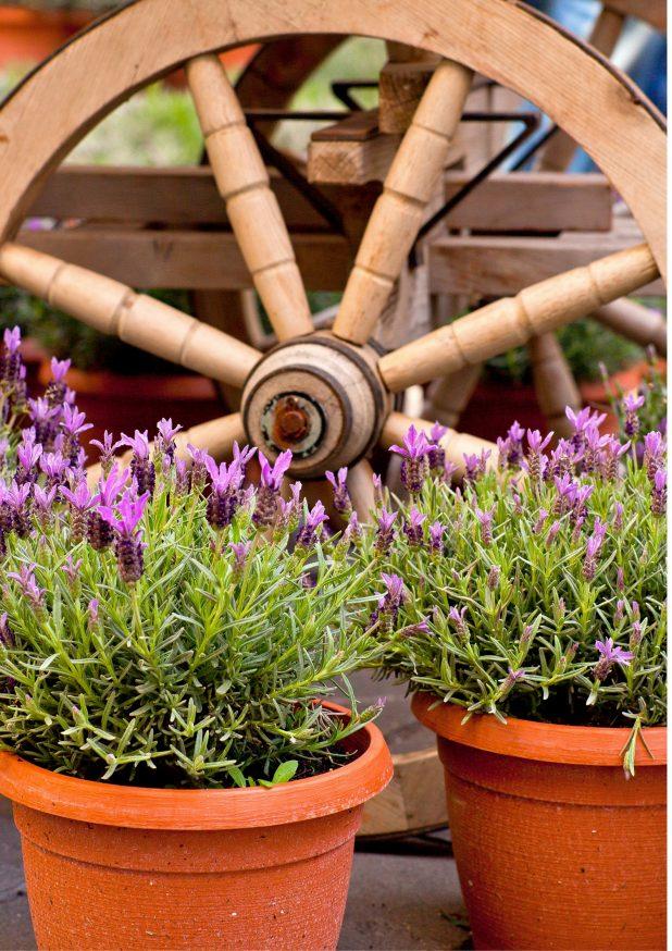 Wagon Wheel   Potted Plants