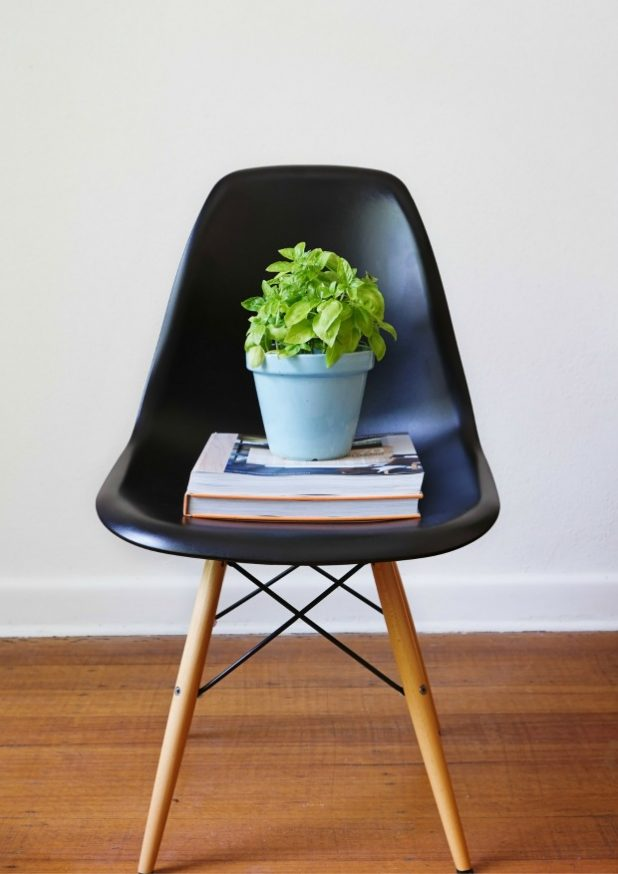 Potted Plant on Black Dining Chair