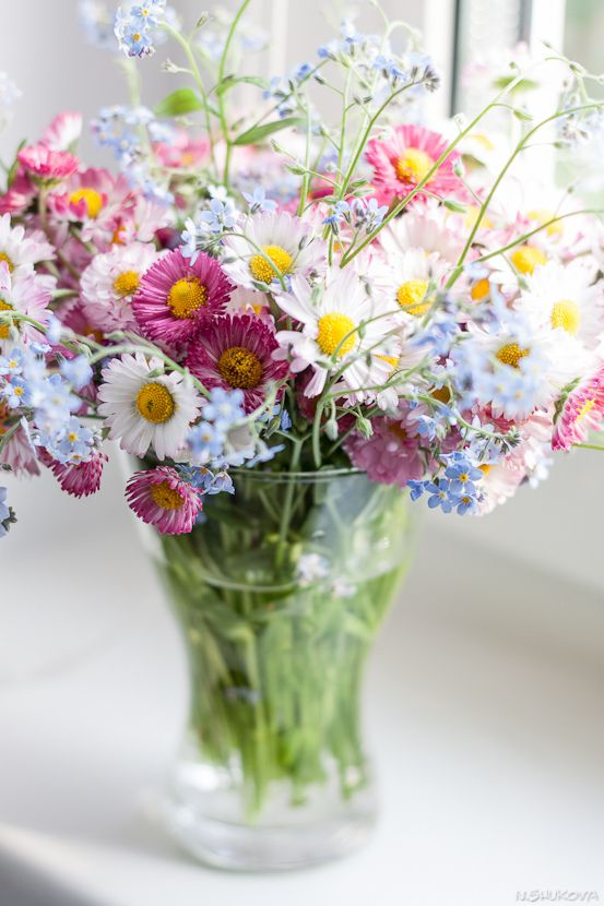 Planning a Cut Flower Garden for Continuous Blooms all Season Long