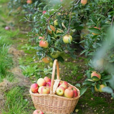 How To Get Fruit Trees To Blossom & Produce Fruit