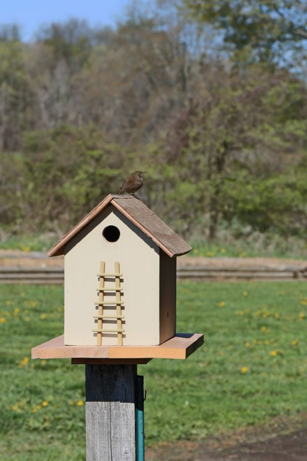 Lamp Turned into a Birdhouse with a Wren Nesting