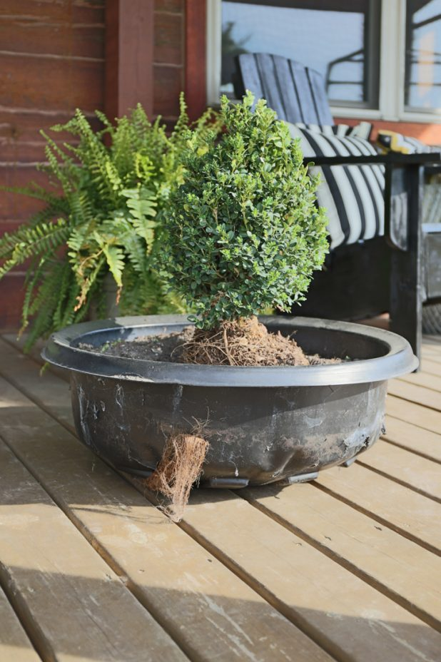 Adding Casters to Whiskey Barrel Planters Makes Them Easy To Relocate for Sun and Rain Purposes