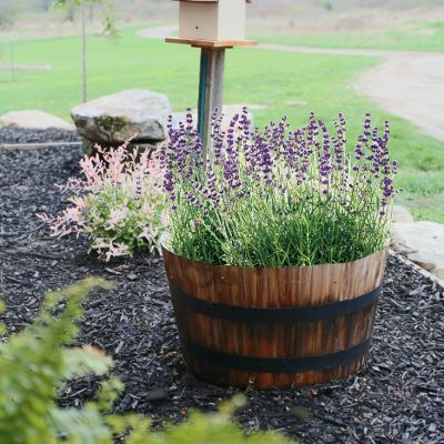 Weeping Cherry & Flamingo Willow Landscape Additions