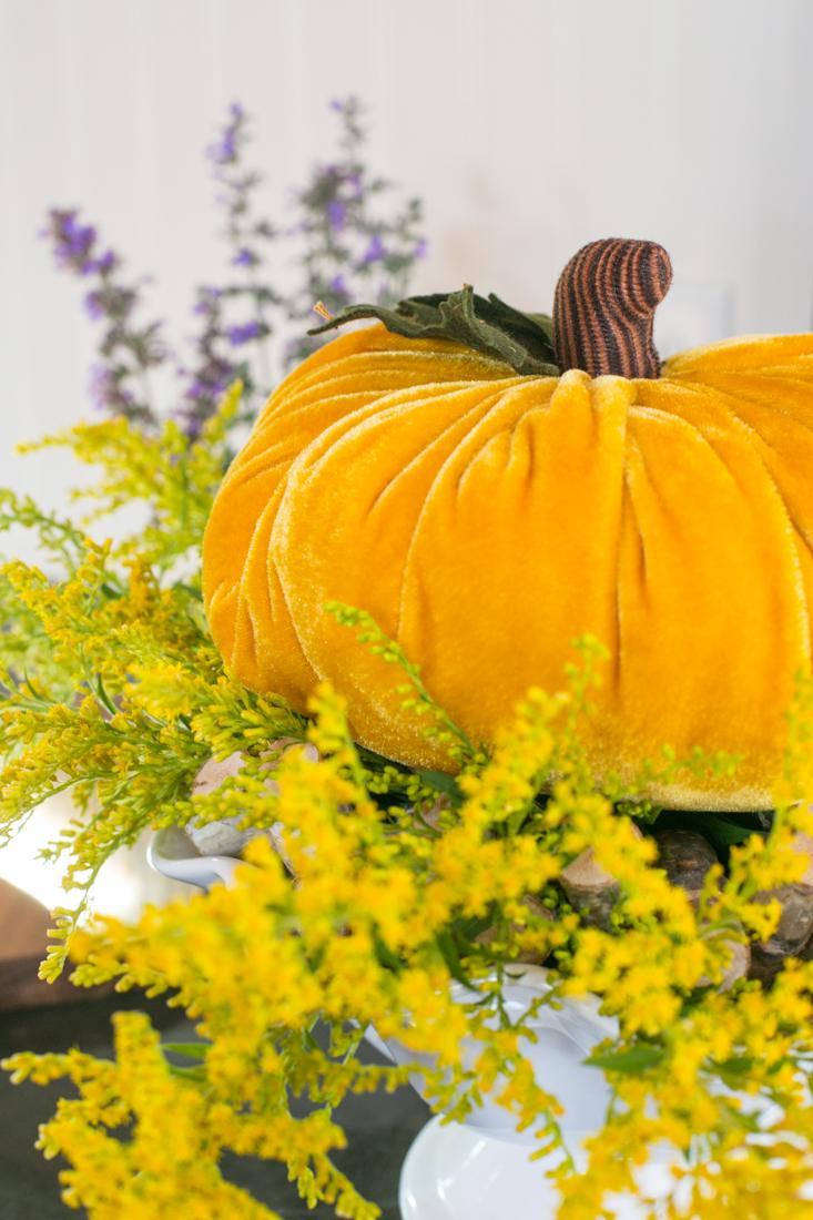 Velvet Pumpkin