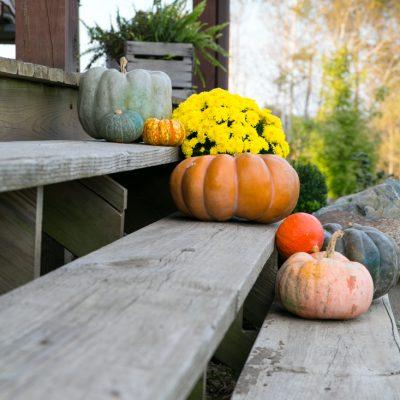 Rustic Fall Porch Entrance Using Exotic Pumpkins