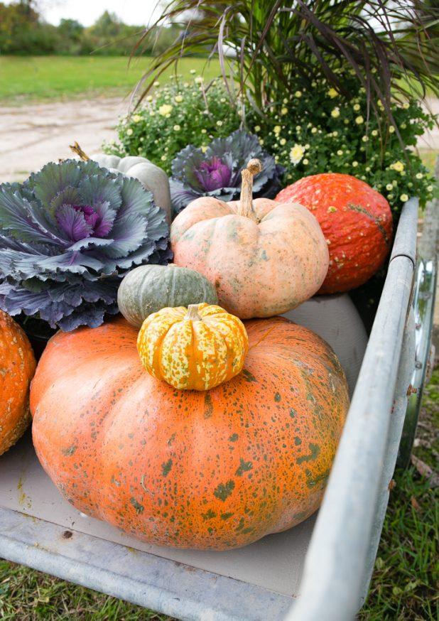 How To Decorate A Garden Cart or Wheelbarrow For Fall Video Tutorial