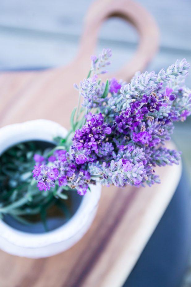 Lavender, Lavender Harvest, Fall Lavender, Lavender Garden