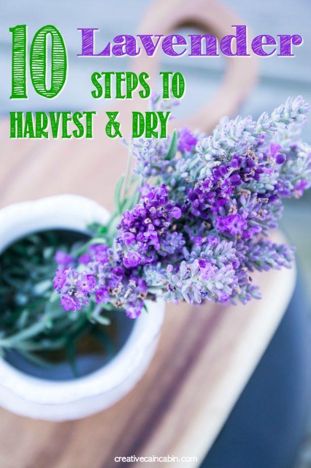Lavender, Harvest Lavender, Dry Lavender