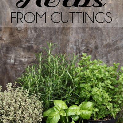 How To Start Herbs From Cuttings