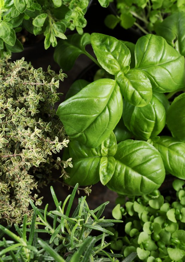 How To Start Herbs From Cuttings. I Winter My Kitchen Herbs Indoors and To Keep Them Thriving I Use Cuttings To Create Fresh Plants