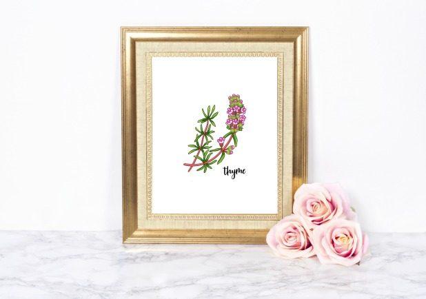 Thyme Herb Printable