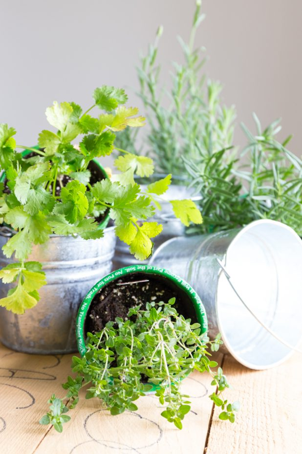 What You'll Need to Create A Small Space Apartment Size Herb Garden, Using Galvanized Containers