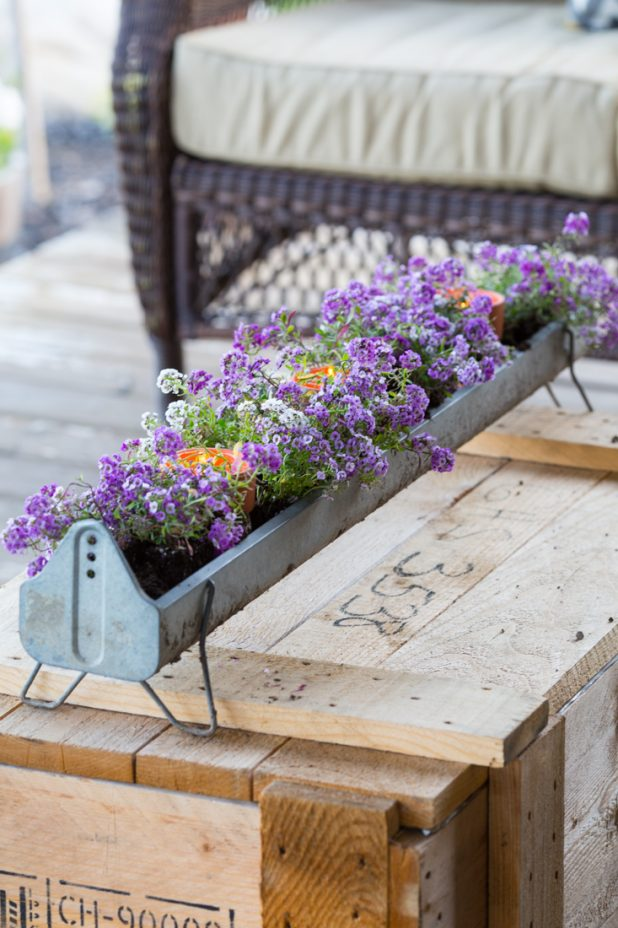 Turn an old galvanized chicken feeder into a flower planter