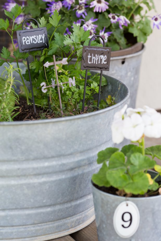 Herb Garden Planted In Galvanized Containers