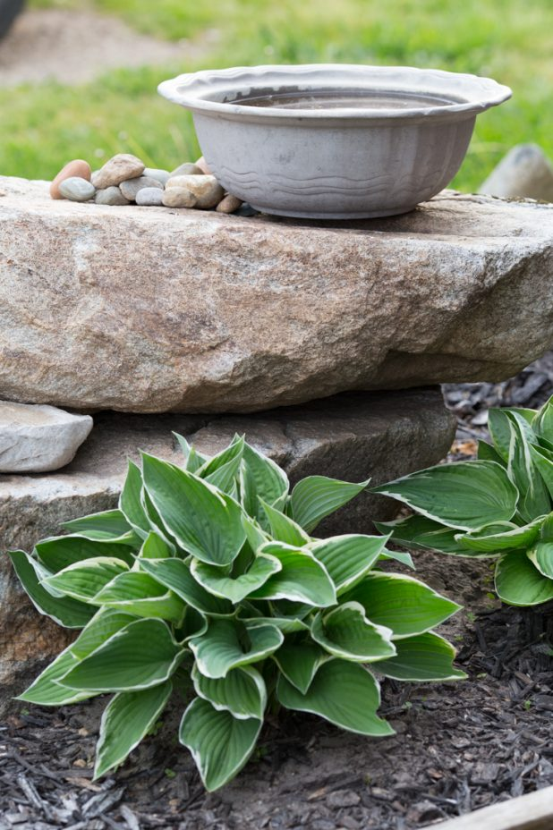 Pewter Bowl Birdbath Surrounded By Hosta