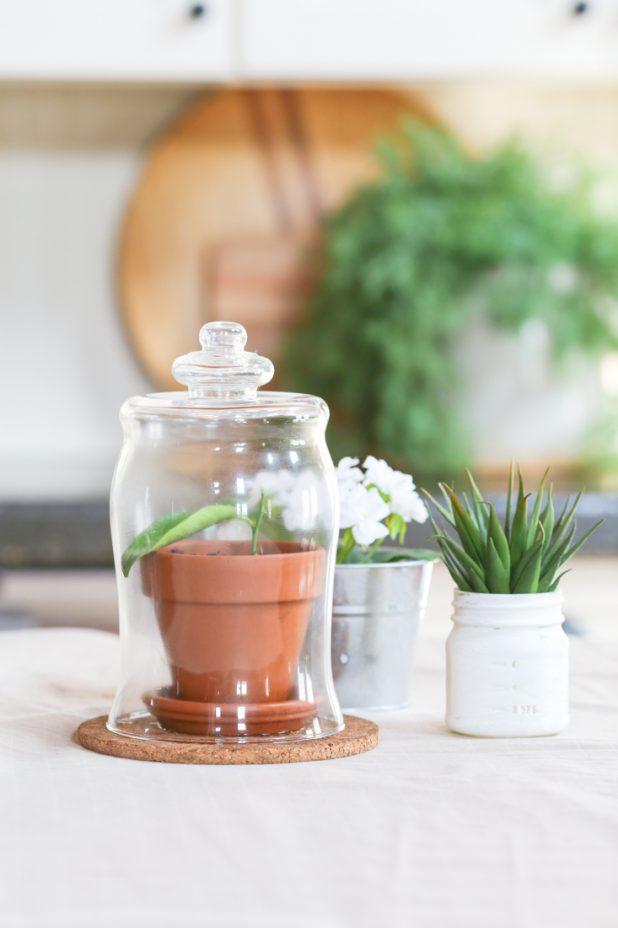 DIY Glass Globe Cloche