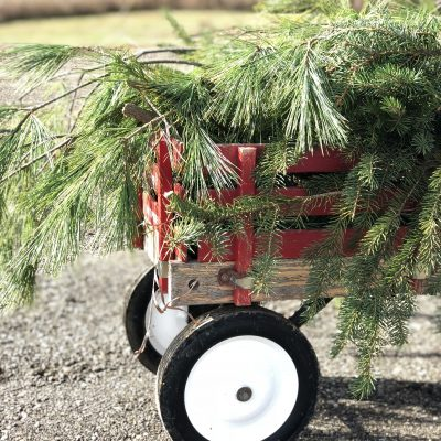 Gathering Pine Trees & Clippings in my Vintage Red Wagon