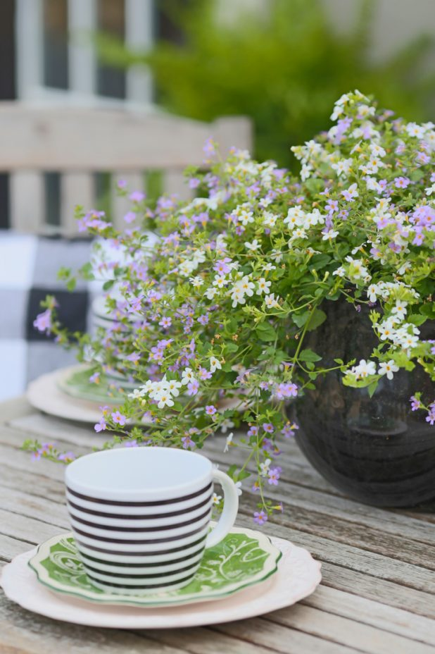 Outdoor Dining, Teak Furniture, Black and White with Pops of Green, Lobelia Potted Flowers