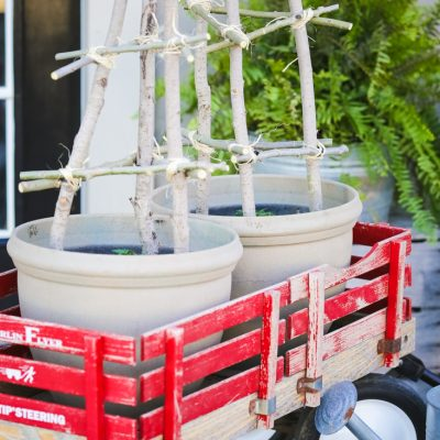 Patio Tomato With DIY Tomato Cage