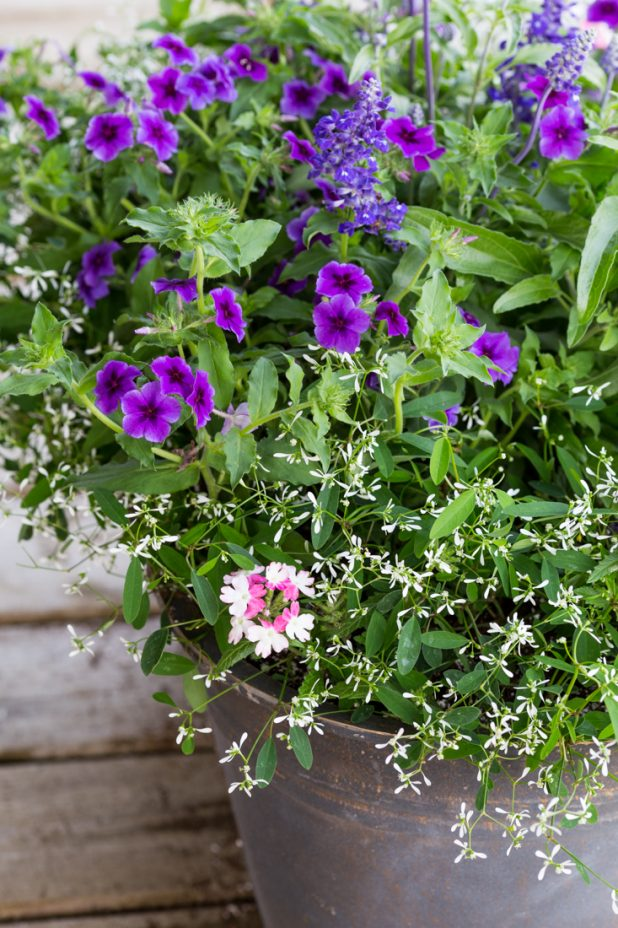 Summer Flowers in Containers