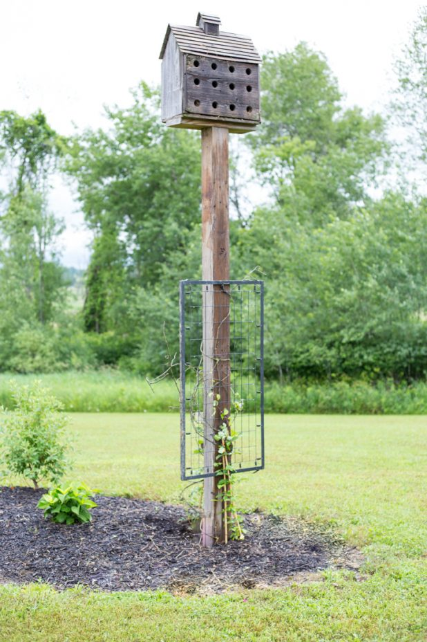 DIY Crib Spring Trellis, Junk Trellis for Climbing Clematis