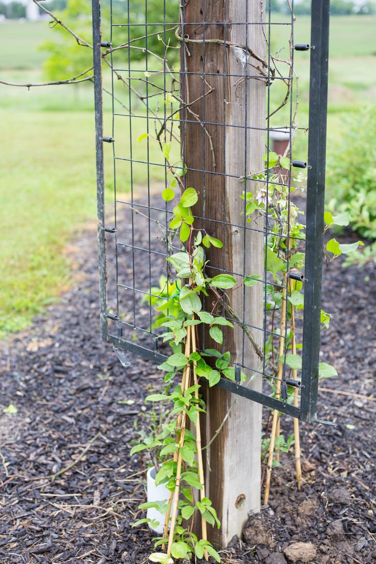 DIY Garden Art Junk Trellis - CREATIVE CAIN CABIN