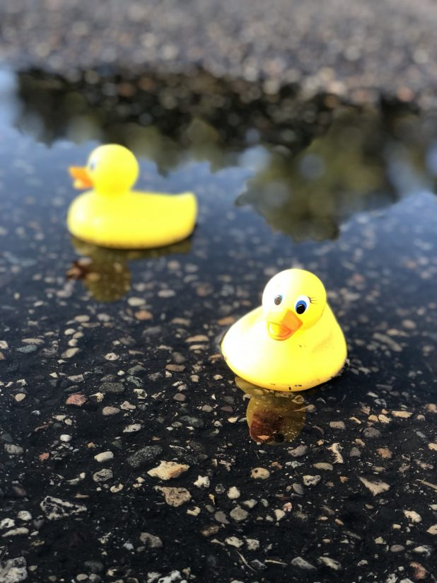 Rubber Ducks floating on water in a pot hole to mark it's existence.