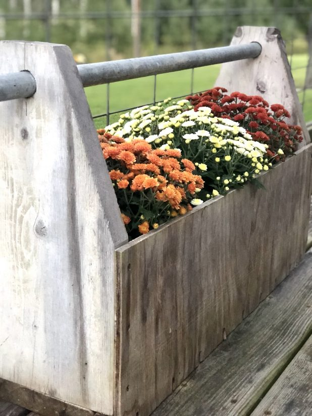 Rustic Vintage Tool Box With Colorful Fall Mums