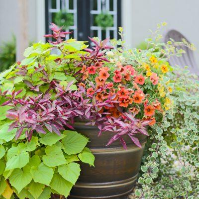 Fire Pit Area Fall Flower Swap