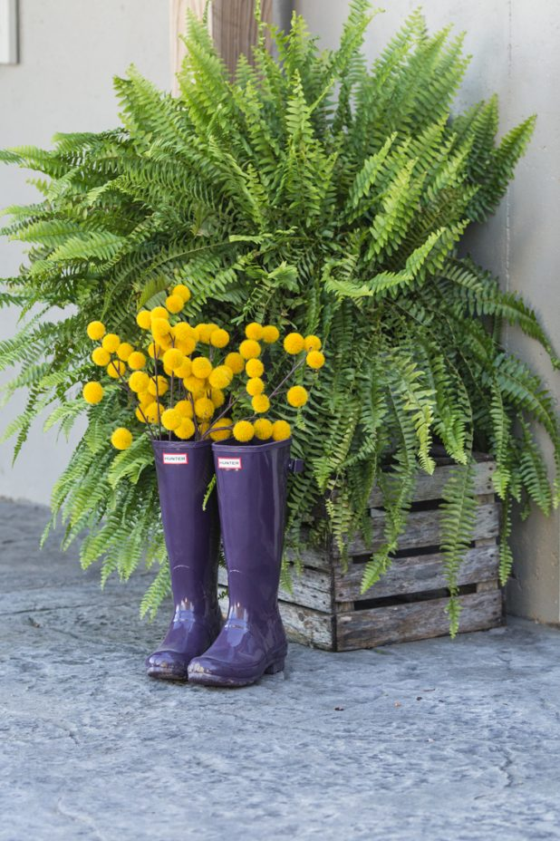 Fall Entrance Using Purple Hunter Boots, Gold and Green