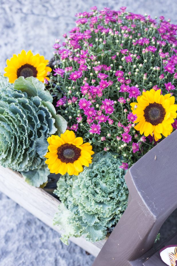 Fall Container with Purple Mum, Decorative Cabbage, and Sunflowers