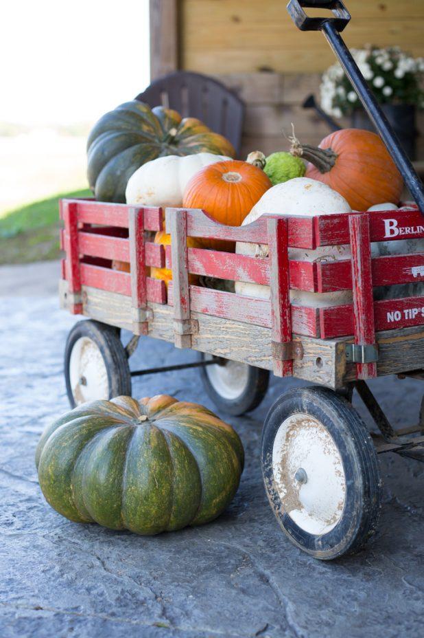 Fall Pumpkin Gathering, Little Red Wagon, Cinderella Pumpkins