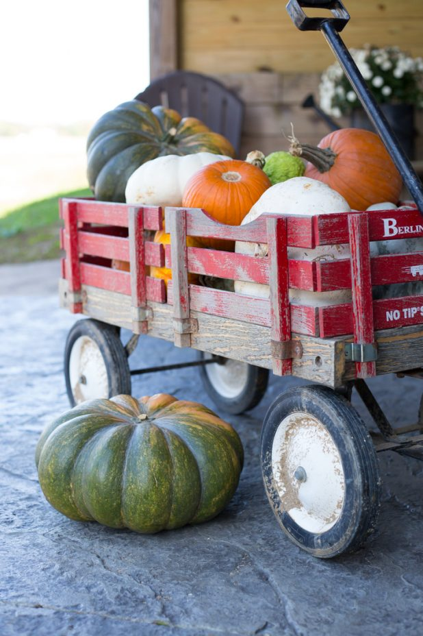 Fall Pumpkin Gathering, Little Red Wagon, Cinderella Pumpkins