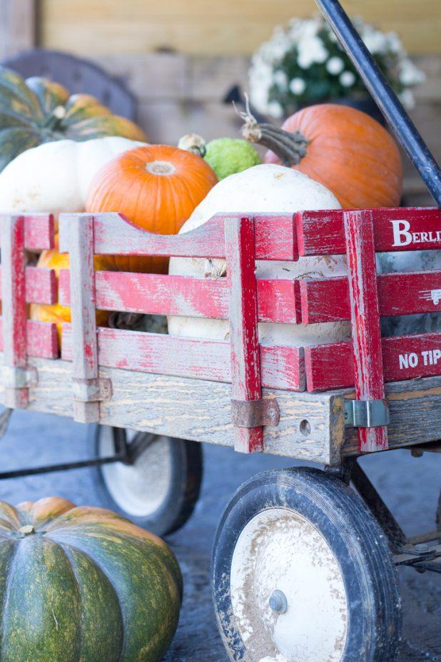 Fall, Pumpkins, Exotic Pumpkins, Pie Pumpkins, Cinderella Pumpkins, Red Wagon