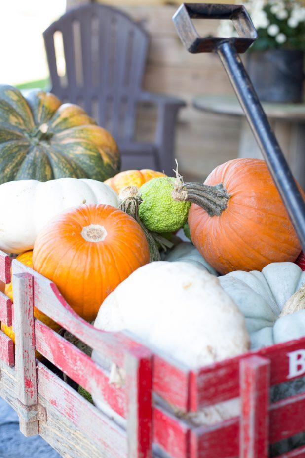 Pumpkin Gathering For Fall Decorating, Little Red Wagon, Cinderella Pumpkins, Pie Pumpkins