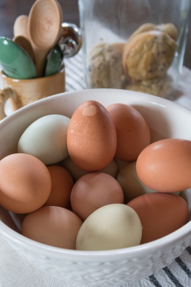 Farm Fresh Egg, A Chicken That Lays Eggs With Hearts on Them