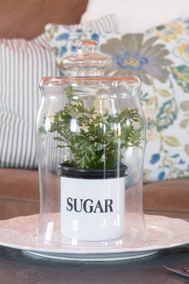 Plant Under Glass Cloche, Farmhouse Style